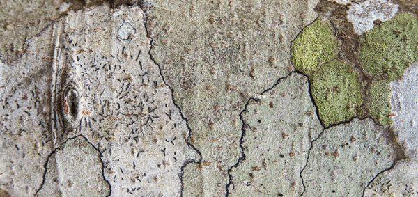"""22/09/17 - Séminaire """"Géographie physique et gestion de l'environnement et des paysages. Expertise, critique et engagement"""""""
